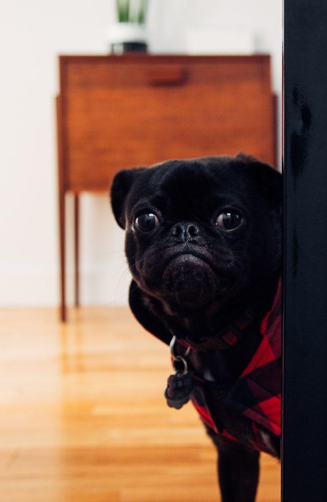 Petit-chien-espiègle