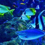 poisson tropicaux