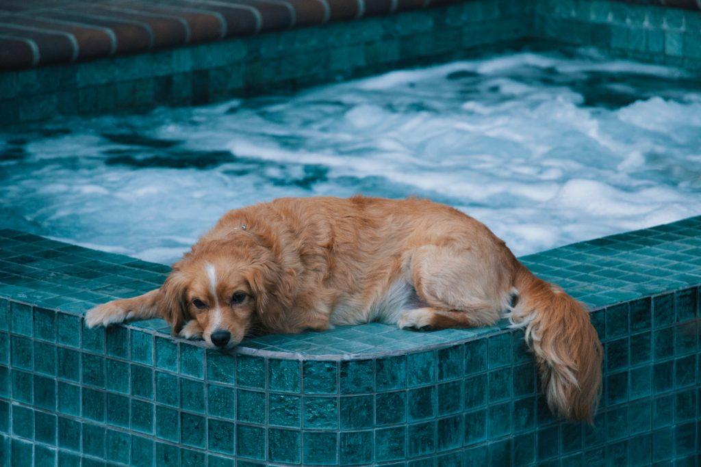 Chien-bord-piscine