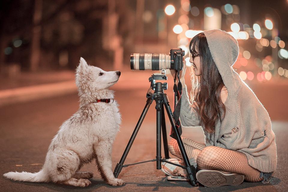 photo chien