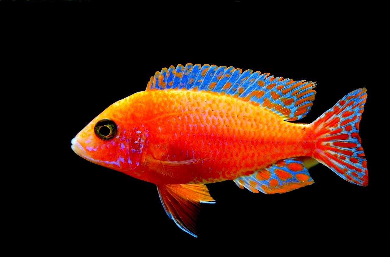 Avoir un poisson rouge plutôt qu'un chien dans la maison.